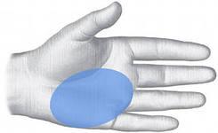 зона соответствия кишечника, печени по Су Джок.